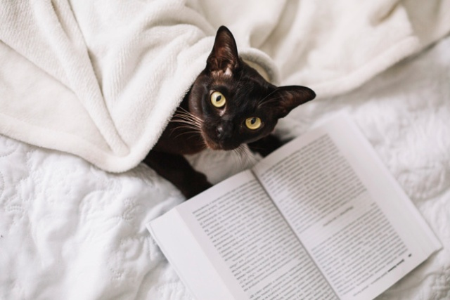 chat qui lit un livre