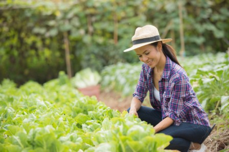 agricultrice en provence avec salade