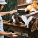 Un week-end à la découverte des fermes de Provence