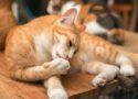 bar à chat dans le centre d'Aix en Provence