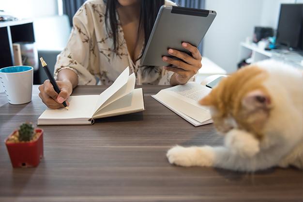 freelance avec son chat